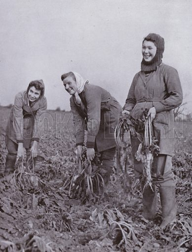 The Women's Land Army in the front line, sugar-beet lifting. Illustration for The Farming Front by Fred Kitchen with photographs by Harold Burdekin (J M Dent, 1943).