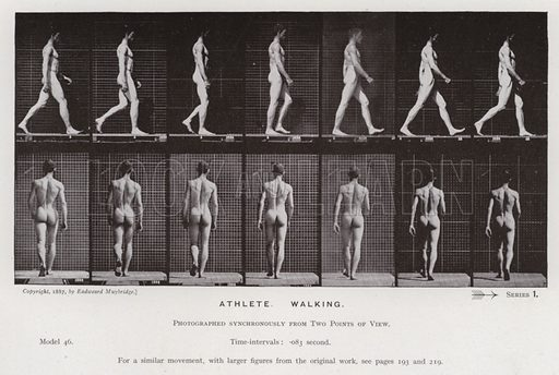 Athlete, Walking. Illustration for The Human Figure in Motion, An Electro-Photographic Investigation of Consecutive Phases of Muscular Actions by Eadweard Muybridge (6th edn, Chapman and Hall, nd).