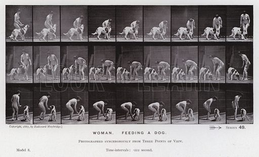 Woman, feeding a dog. Illustration for The Human Figure in Motion, An Electro-Photographic Investigation of Consecutive Phases of Muscular Actions by Eadweard Muybridge (6th edn, Chapman and Hall, nd).