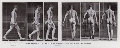 Some phases in the walk of an athlete, carrying a 50-pound dumb-bell. Illustration for The Human Figure in Motion, An Electro-Photographic Investigation of Consecutive Phases of Muscular Actions by Eadweard Muybridge (6th edn, Chapman and Hall, nd).
