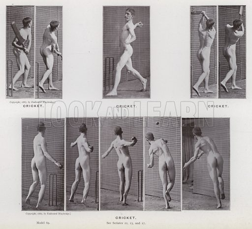 Cricket. Illustration for The Human Figure in Motion, An Electro-Photographic Investigation of Consecutive Phases of Muscular Actions by Eadweard Muybridge (6th edn, Chapman and Hall, nd).
