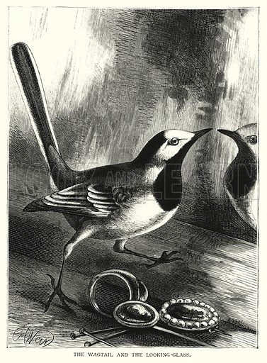 The Wagtail and the Looking-Glass. Illustration for The Infant's Magazine (1884).