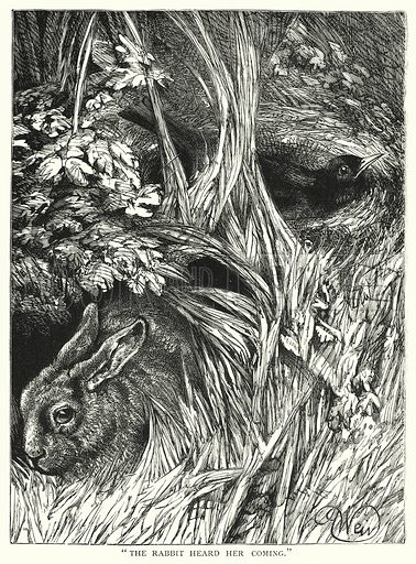 """The rabbit heard her coming."" Illustration for The Infant's Magazine (1884)."