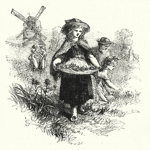 Gathering Cowslips. Illustration for The Infant's Magazine (1886).