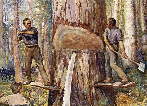 Lumbermen cutting timber. Illustration for The King's Empire with an introduction by W H Fitchett (Cassell, 1910).