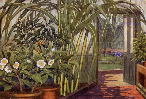 """Sugar-cane, tea-plant, and coffee-plant. Illustration for A Nursery Book of Science by """"The Cockiolly Bird"""" (T Nelson, c 1920)."""