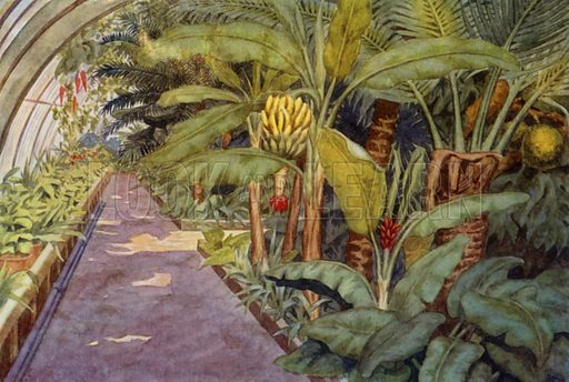 "The palm house. Illustration for A Nursery Book of Science by ""The Cockiolly Bird"" (T Nelson, c 1920)."