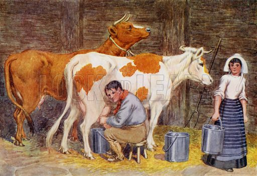 """Milking time. Illustration for A Nursery Book of Science by """"The Cockiolly Bird"""" (T Nelson, c 1920)."""