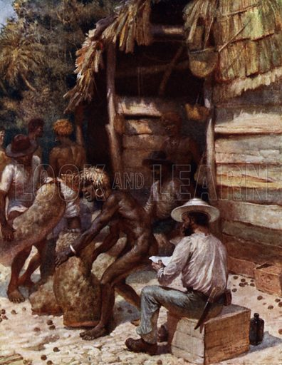 Johnnie Pratt with his Ivory Nuts at Simbo, Solomon Islands. Illustration for The Savage South Seas described by E Way Elkington (A&C Black, 1907).