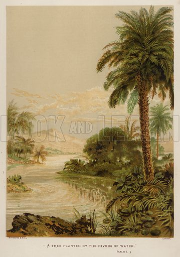 """""""A tree planted by the rivers of water,"""" Psalm I, 3 Illustration for The Sunday at Home (1878)."""