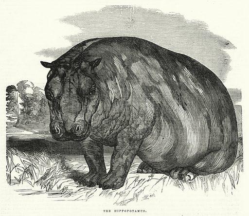 The Hippopotamus. Illustration for The United States Magazine, Vol I (J M Emerson, nd).