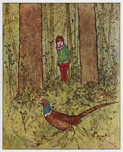 The pheasant. Illustration for Through the Wood, A Picture Book, illustrated by John Hassall, written by Harold Avery (Thomas Nelson, c 1907).