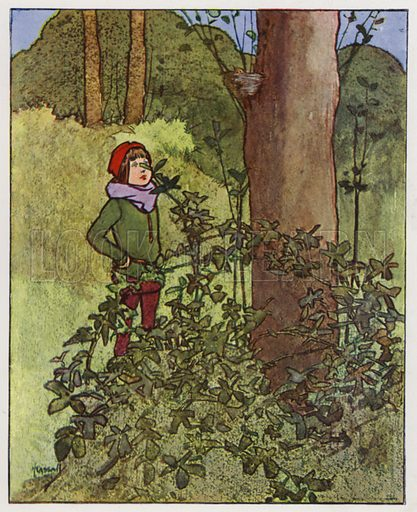The thrush. Illustration for Through the Wood, A Picture Book, illustrated by John Hassall, written by Harold Avery (Thomas Nelson, c 1907).
