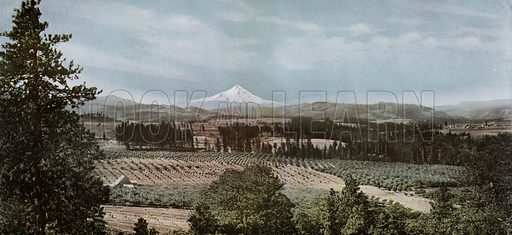 A Portion of the Hood River Valley, Mount Hood in the Distance. Illustration for a booklet about Oregon The Land of Opportunity (Portland Chamber of Commerce, 1911).