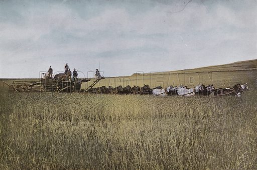 Threshing in Eastern Oregon. Illustration for a booklet about Oregon The Land of Opportunity (Portland Chamber of Commerce, 1911).