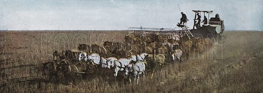Grain Field in Eastern Oregon. Illustration for a booklet about Oregon The Land of Opportunity (Portland Chamber of Commerce, 1911).