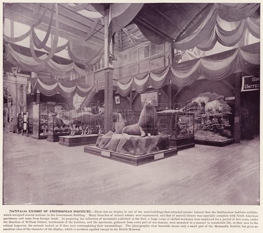 Mammalia Exhibit of Smithsonian Institute. Illustration for The Magic City, a Massive Portfolio of Original Photographic Views of the Great World's Fair edited by J W Buel (Historical Publishing, 1894).