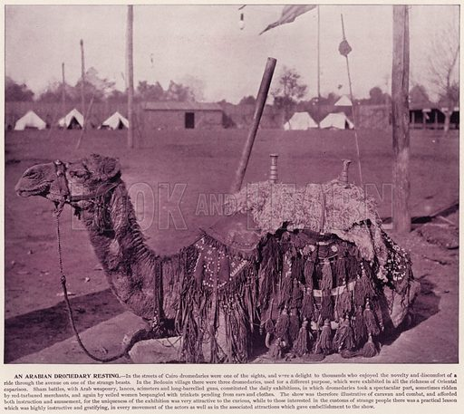 An Arabian Dromedary resting. Illustration for The Magic City, a Massive Portfolio of Original Photographic Views of the Great World's Fair edited by J W Buel (Historical Publishing, 1894).