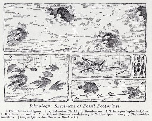 Ichnology, specimens of fossil footprints. Illustration for The Harmsworth Encylopaedia (c 1922).