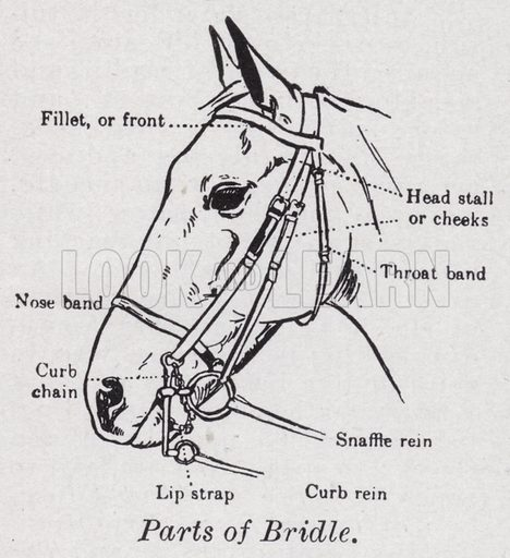 Parts of bridle. Illustration for The Harmsworth Encylopaedia (c 1922).