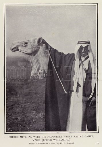 Sheikh Mitkhal with his favourite white racing camel, Mazir, Little Whirlwind. Illustration for More Heroes of Modern Adventure by T C Bridges and H Hessell Tiltman (Harrap, 1929).