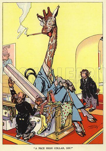 Giraffe being fitted for a shirt collar