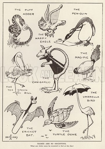 Amusing animals. Illustration from The Boy's Own Annual (The Boy's Own Paper Office, London, 1913).