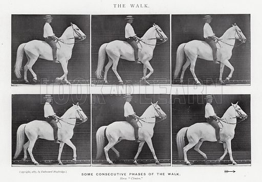 The Walk. Illustration for Animals in Motion, An Electro-Photographic Investigation of Consecutive Phases of Muscular Actions, by Eadweard Muybridge, Commenced 1872, Completed 1885 (5th impression, Chapman & Hall, 1925).