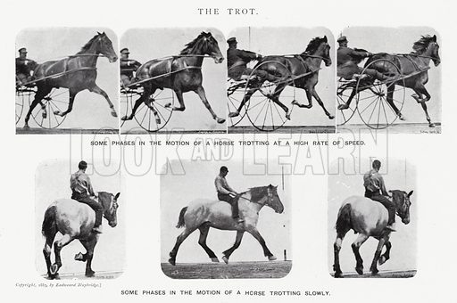 The Trot. Illustration for Animals in Motion, An Electro-Photographic Investigation of Consecutive Phases of Muscular Actions, by Eadweard Muybridge, Commenced 1872, Completed 1885 (5th impression, Chapman & Hall, 1925).