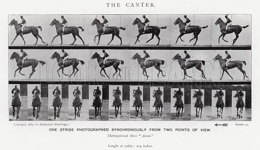 The Canter. Illustration for Animals in Motion, An Electro-Photographic Investigation of Consecutive Phases of Muscular Actions, by Eadweard Muybridge, Commenced 1872, Completed 1885 (5th impression, Chapman & Hall, 1925).