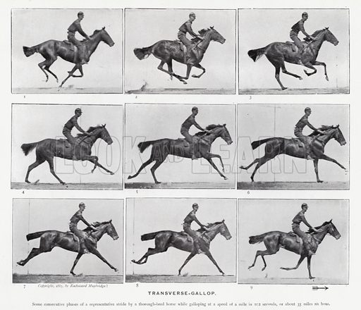 Transverse-Gallop. Illustration for Animals in Motion, An Electro-Photographic Investigation of Consecutive Phases of Muscular Actions, by Eadweard Muybridge, Commenced 1872, Completed 1885 (5th impression, Chapman & Hall, 1925).