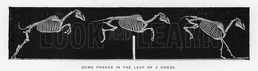 Some phases in the leap of a horse. Illustration for Animals in Motion, An Electro-Photographic Investigation of Consecutive Phases of Muscular Actions, by Eadweard Muybridge, Commenced 1872, Completed 1885 (5th impression, Chapman & Hall, 1925).