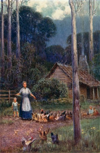 A hut in the bush. Illustration for Australia by Frank Fox (A&C Black, 1912).