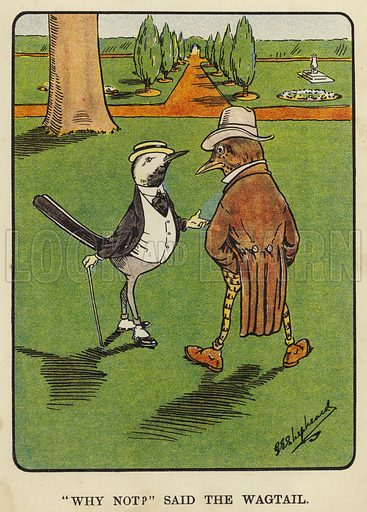 """""""Why not?"""" said the wagtail. Illustration for Bubbles in Birdland by Harold Simpson illustrated by G E Shepheard (Greening, 1908)."""