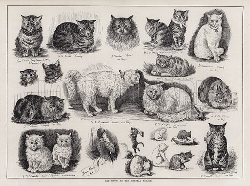Cat Show at the Crystal Palace. Illustration for The Illustrated Sporting and Dramatic News, 27 October 1883.