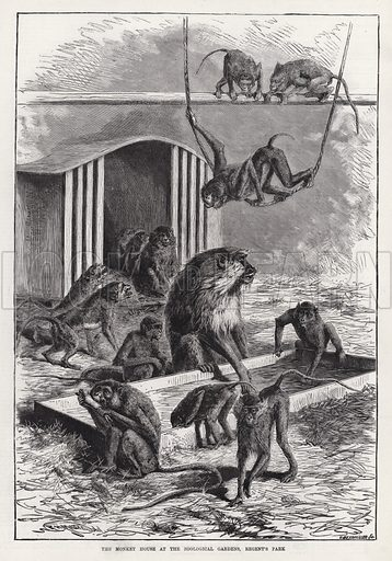 The Monkey House at the Zoological Gardens, Regent's Park. Illustration for The Illustrated Sporting and Dramatic News, 5 January 1884.