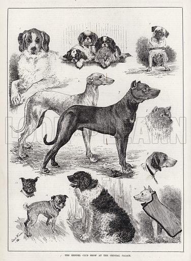 The Kennel Club Show at the Crystal Palace. Illustration for The Illustrated Sporting and Dramatic News, 26 January 1884.