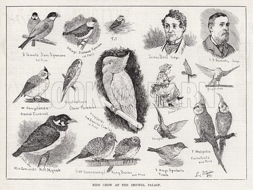 Bird Show at the Crystal Palace. Illustration for The Illustrated Sporting and Dramatic News, 16 February 1884.
