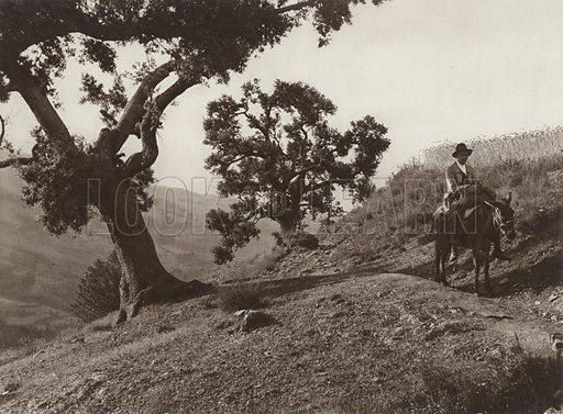 In the Sierra Nevada, Holm Oak. Illustration for Das Unbekannte Spanien, Baukunst, Landschaft, Volksleben, by Kurt Hielscher (Ernst Wasmuth, 1925).  Gravure printed.