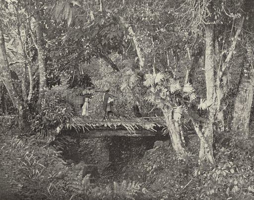 Tropical Scene in the State of Vera Cruz, Mexico. Illustration for America Photographed (Donohue, Henneberry, 1897).