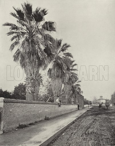 Palms in Streets of Los Angeles, California. Illustration for America Photographed (Donohue, Henneberry, 1897).