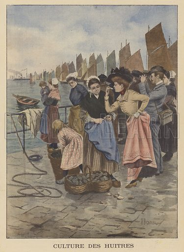 Harvesting oysters at Cancale, Brittany