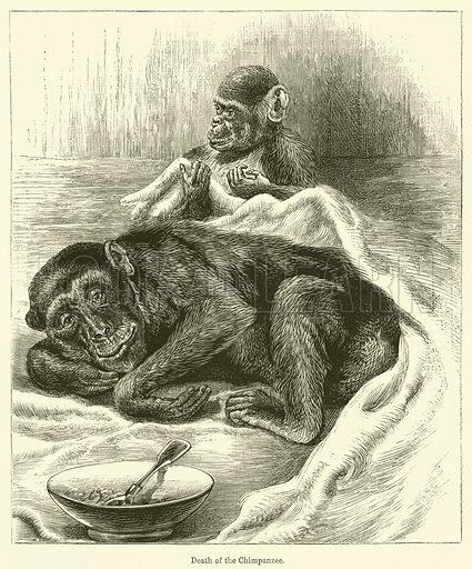 Death of the Chimpanzee