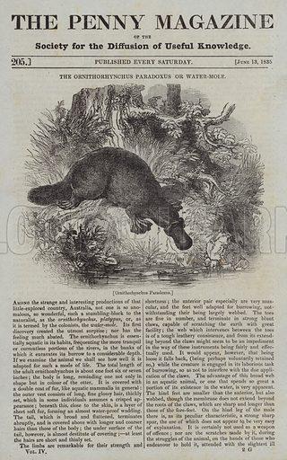 Ornithorhynchus Paradoxus. Illustration for The Penny Magazine, 13 June 1835.