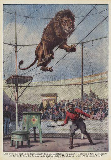 Non s'era mai visto il re degli animali diventare equilibrista