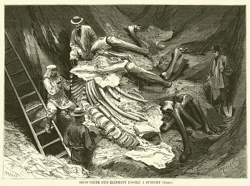 Decouverte d'un elephant fossile a Durfort, Gard