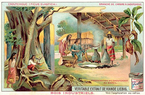 Rubber tree. Preparation of rubber in Brazil. Liebig card, published in late 19th or early 20th century. From a series on varieties of tree with industrial uses.