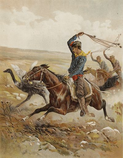 Hunting the Ostrich, South America