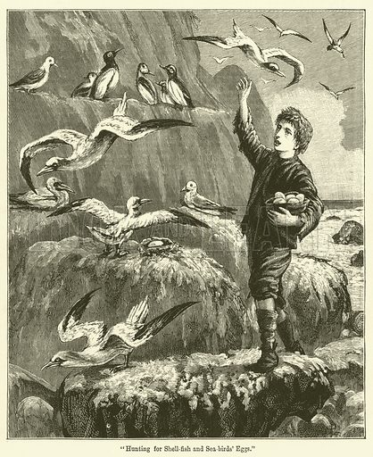 """""""Hunting for Shell-fish and Sea-birds' Eggs."""" Illustration for Chatterbox (1889)."""
