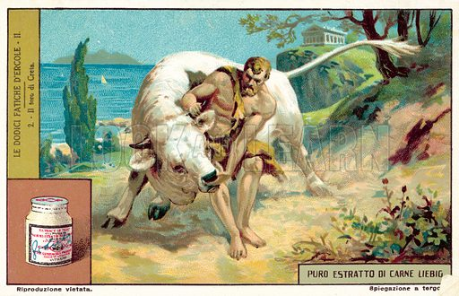 The capture of the Cretan Bull. Liebig card, published in late 19th or early 20th century. From a series on the Twelve Labours of Hercules.